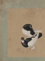 清 佚名 鸽谱图册